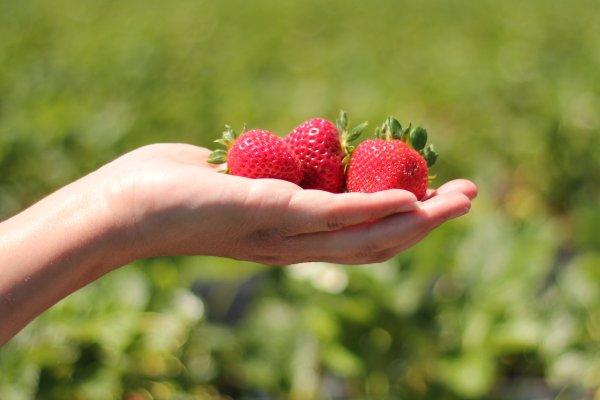 Doppelte Ernte: ökologische Lebensmittel aus dem insektenfreundlichen Garten - Stammtisch mit Dr. Sandra Krauß